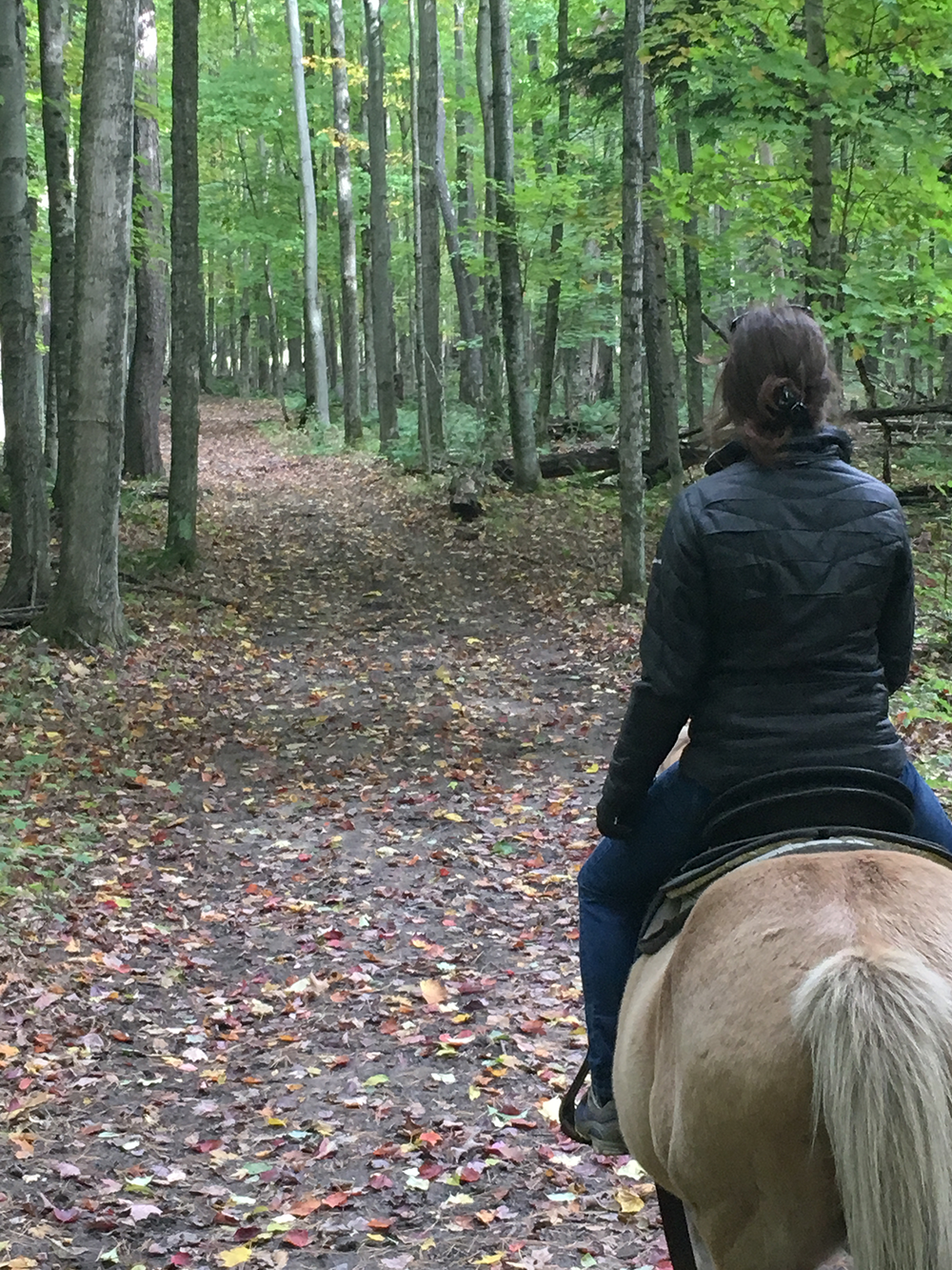 Horseback Trail Ride at Boyne Highlands Resort | Petoskey Area, Michigan