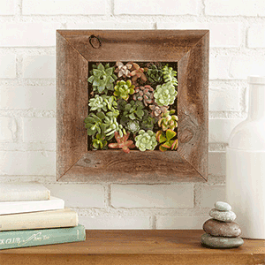 Succulent Living Wall | Gift Idea from Uncommon Goods | Big Family Minimalist